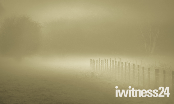 A foggy Hatfield Forest