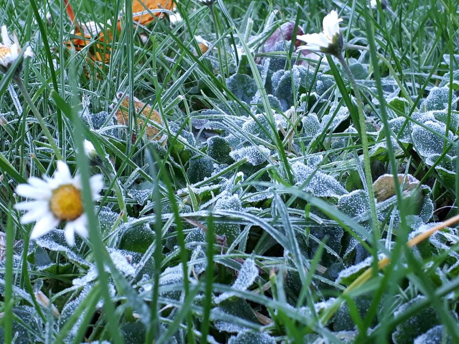 Madeliefjes veld bevroren