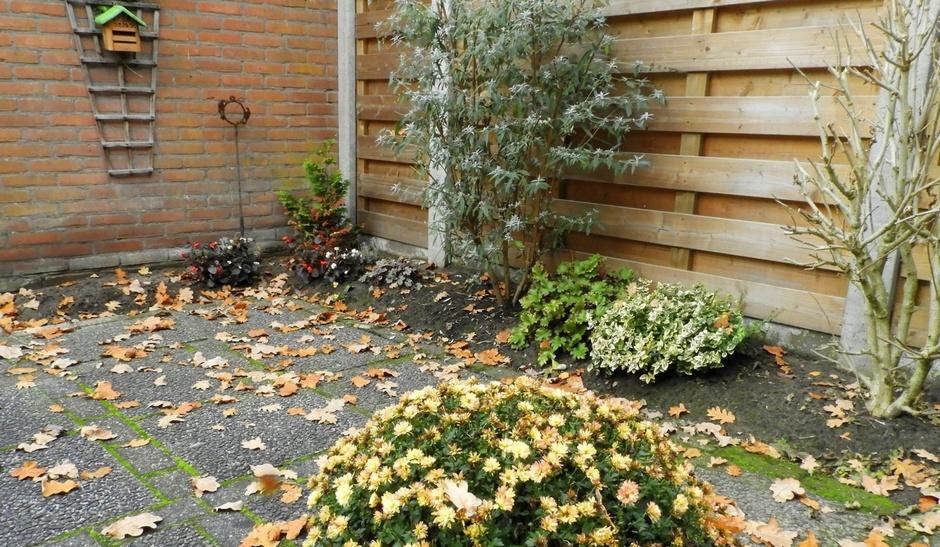 Oosten wind dus veel blad in de tuin