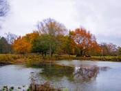 pond and reflection