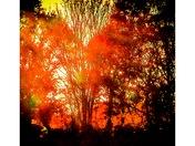 Fire glow, River Otter