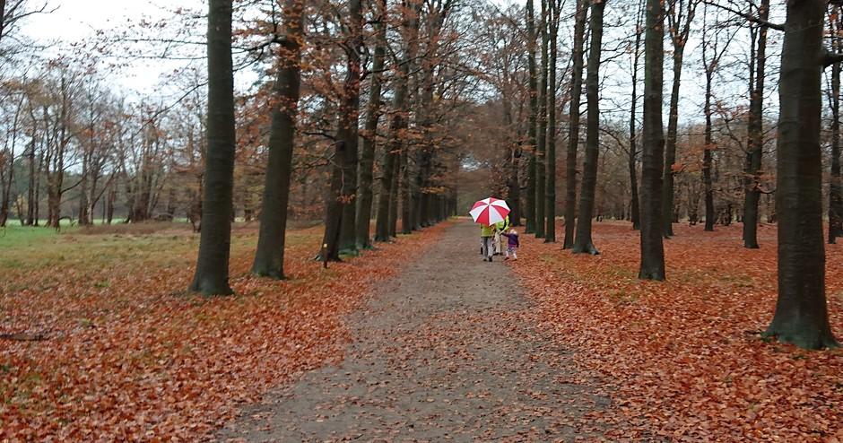 Weerfoto - zacht en druilerig herfstweer