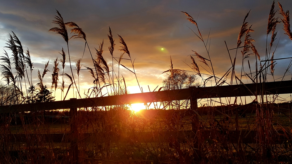 Avond, december zon