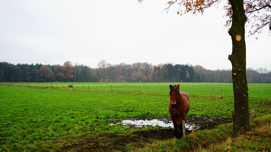 Paard in weiland