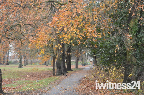 Late Autumn in Valentines Park.