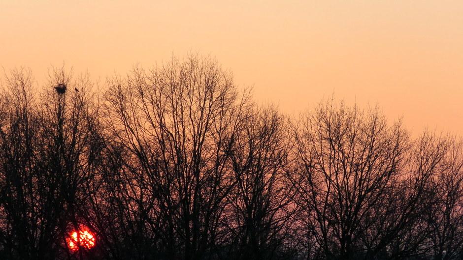 vrieskoude zonsopkomst in waalwijk