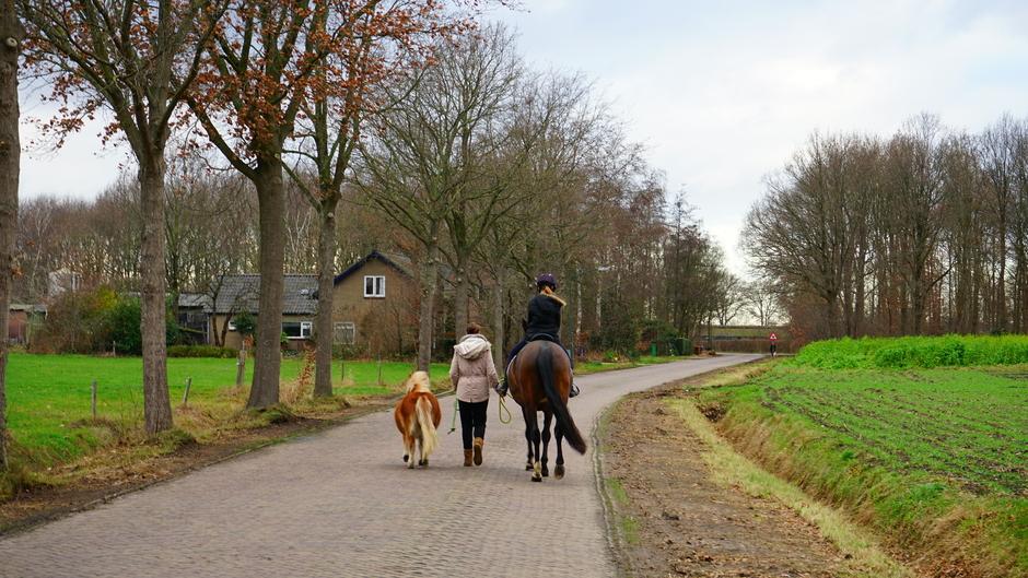 Paardrijden en pony uitlaten