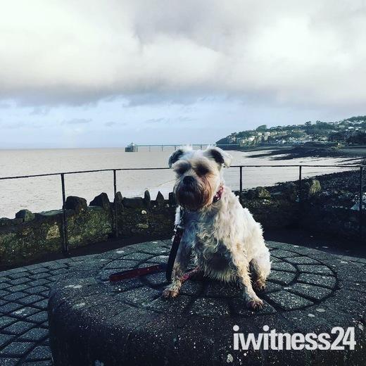 Bella having a saterday morning walk in clevedon