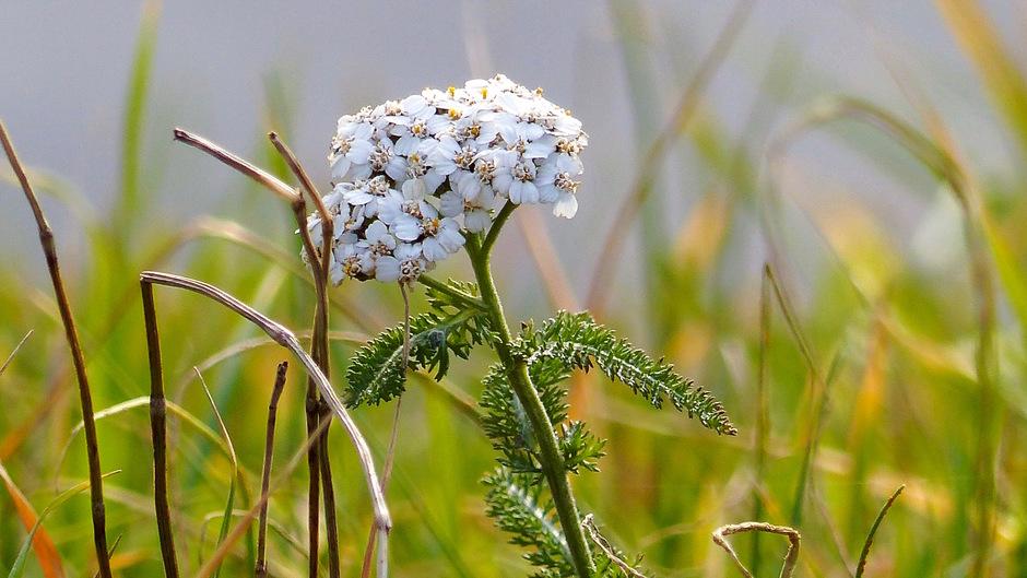 Eindejaars plantenjacht (Floron)