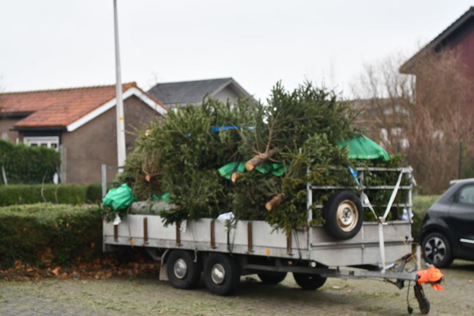 Kerstbomen verzamelen