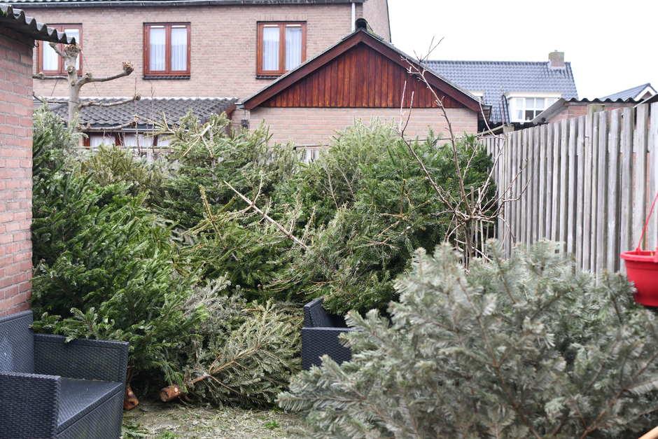Kerstbomen vezramelen