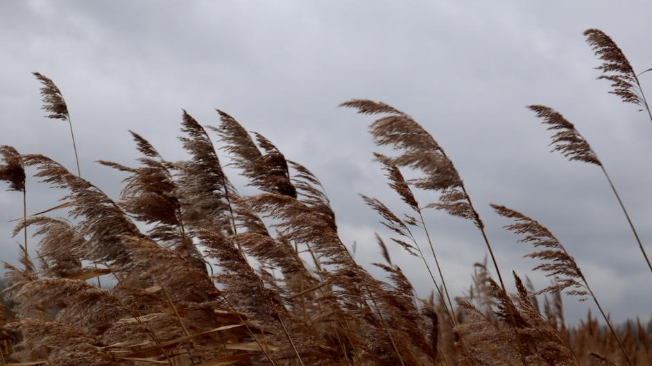Grijze dag met toenemende wind