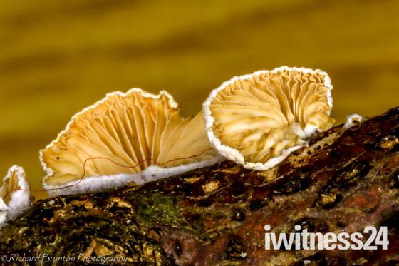 Minature Fungi