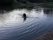 Splashing around over mousehold