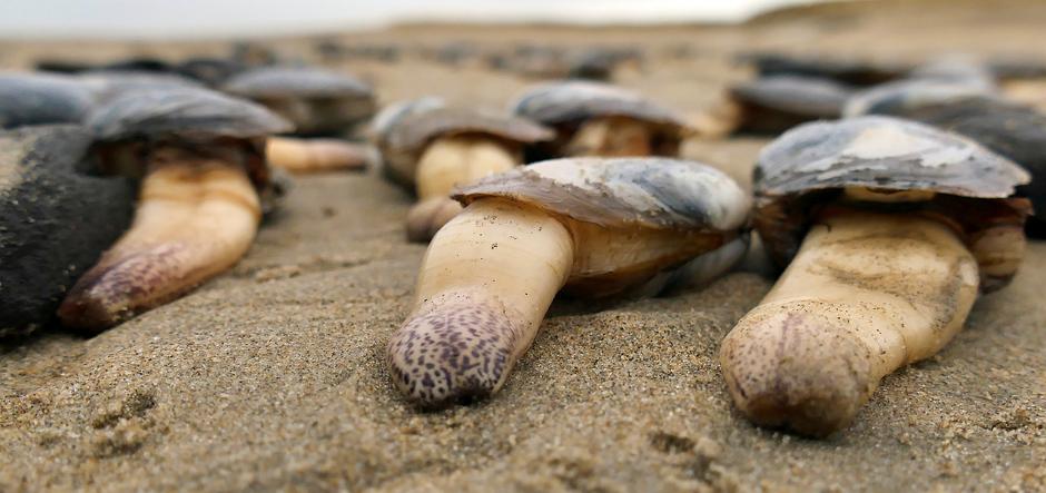 Tongen op het strand van Noordwijk aan Zee, na de storm