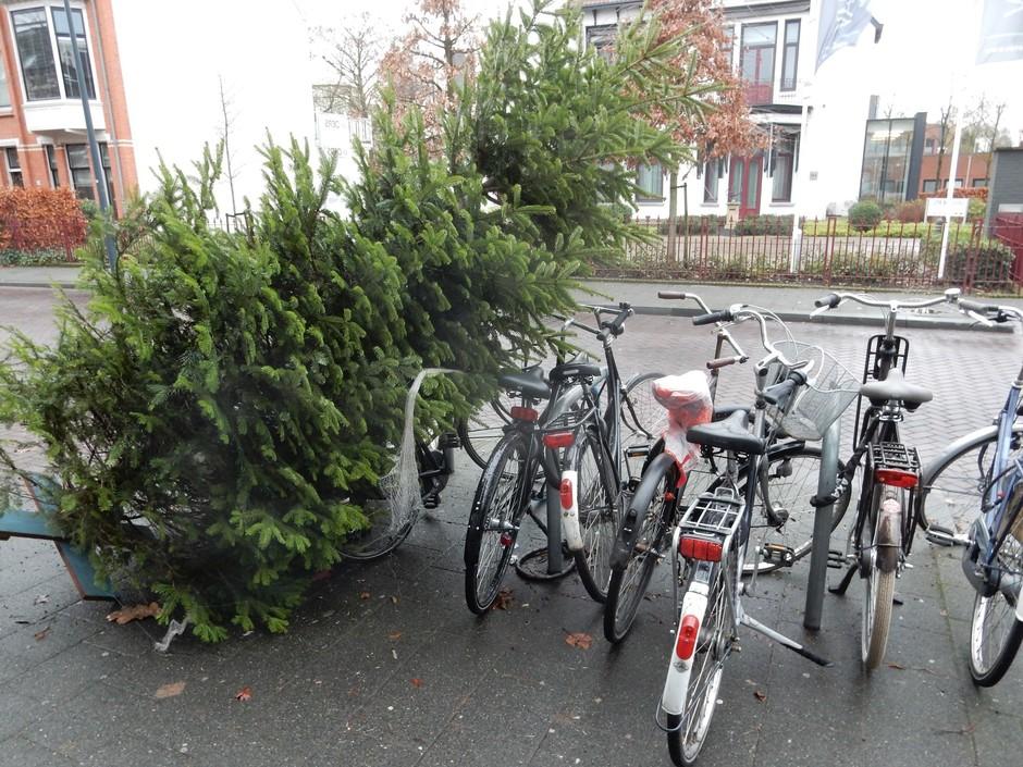 Kerstbomen langs de wegen