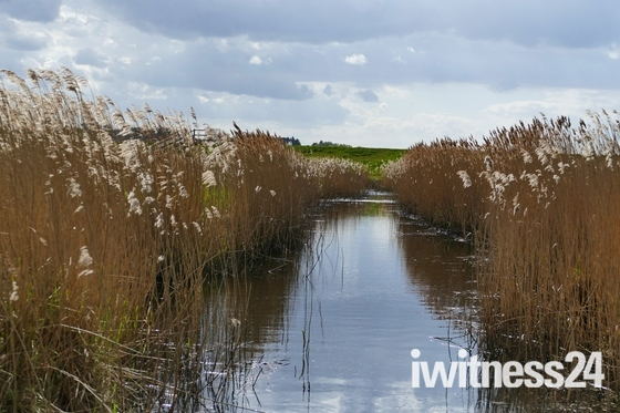 WATER, THROUGH THE REED BEDS
