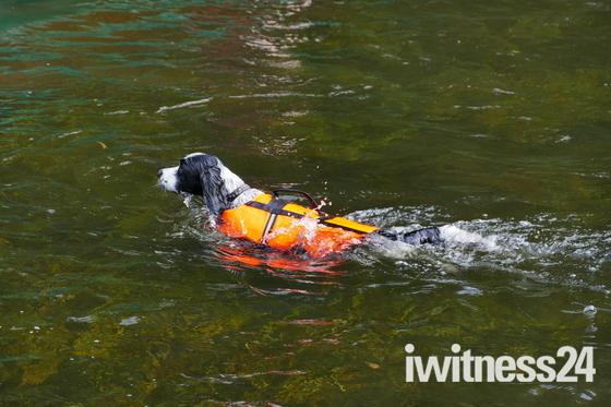 WATER, DOG HAVING A SWIM