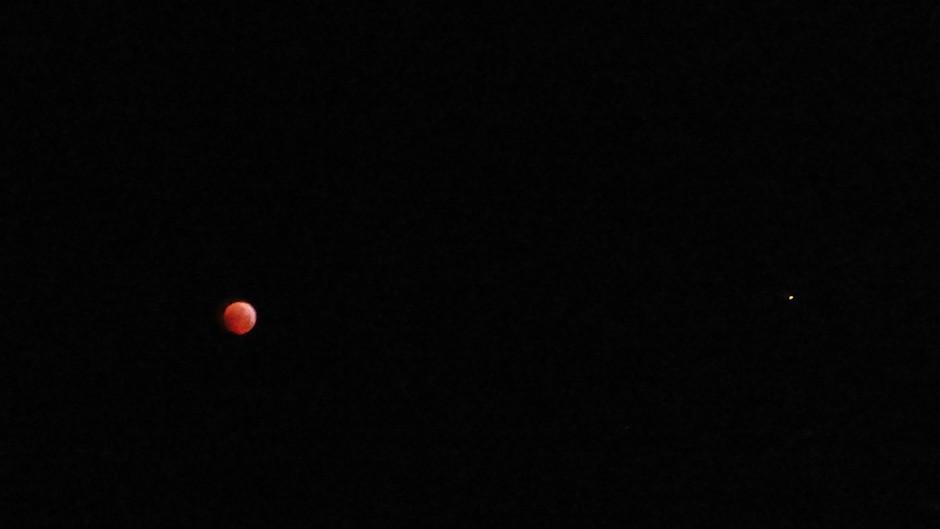 super-bloed-wolfmaan met ster