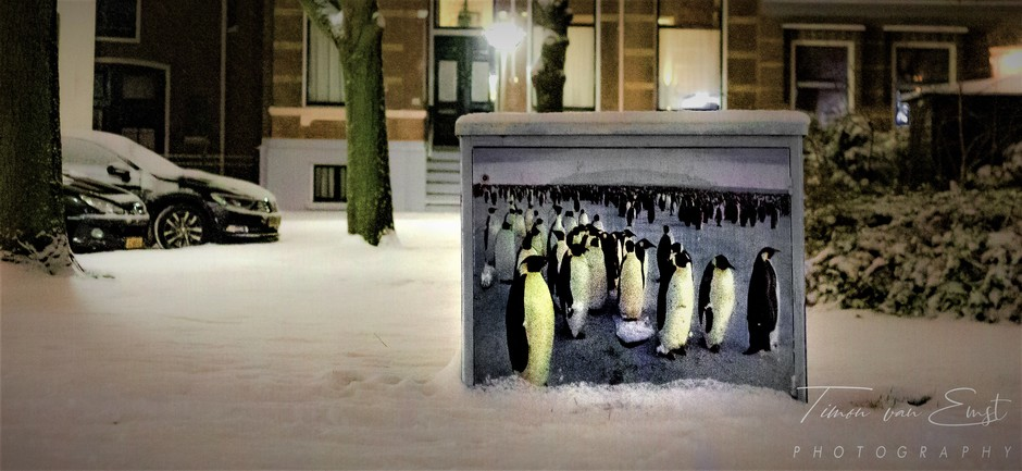 Neder Pinguins.