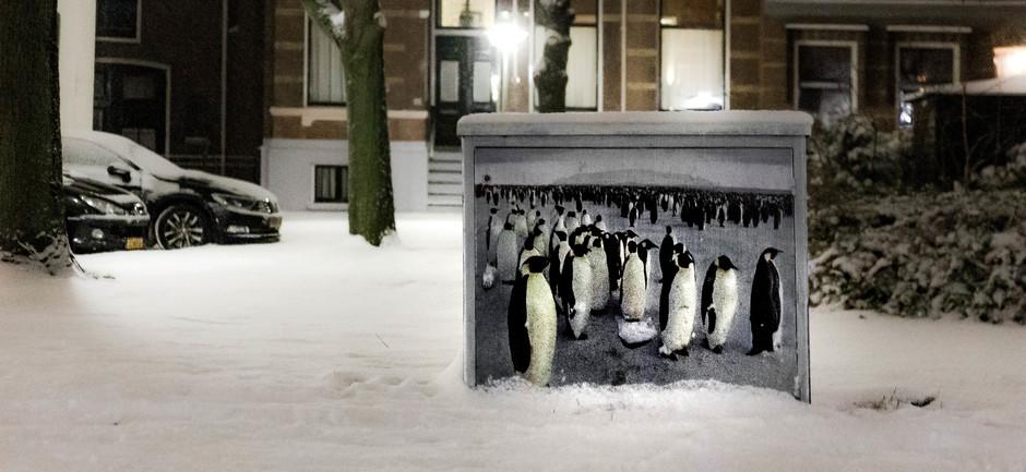 Neder-pinguins