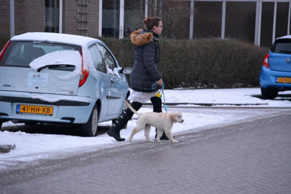 koud hondje uitlaten