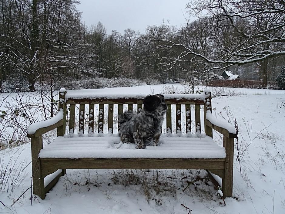 Even een korte pauze na al dat sneeuwpret.