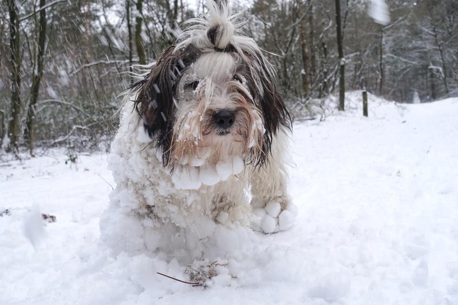 Fannar de sneeuwbal