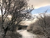 Snowing on Woodbury Common