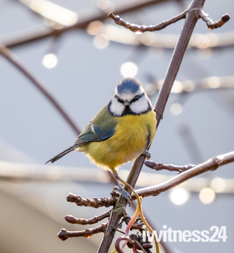 more birds in my garden