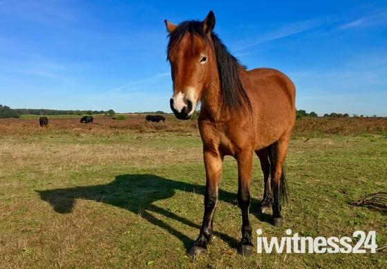 Shadow of a pony
