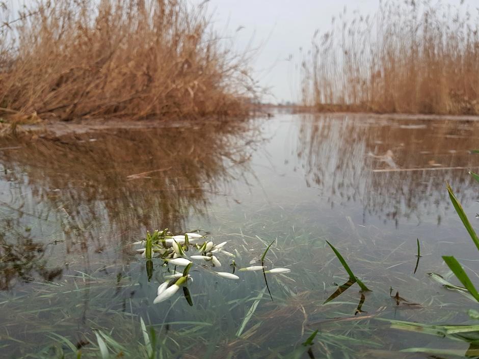 Verdronken voorjaar