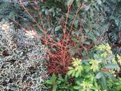 Winter Colour in The Garden