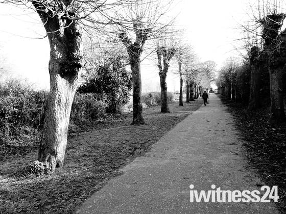 Photo Challenge: Norfolk Paths