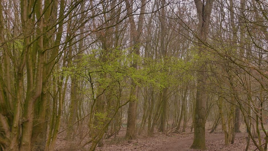Eindelijk groen in het dorre bos, Voorschoten