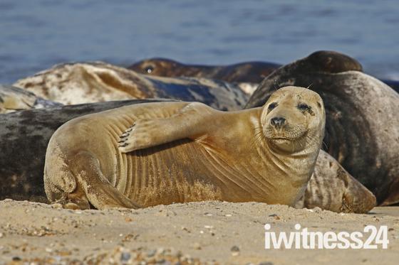 Seals at Waxahm