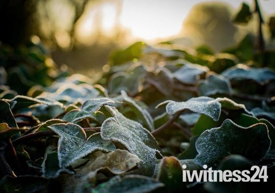 Early Frosty Spring Morning