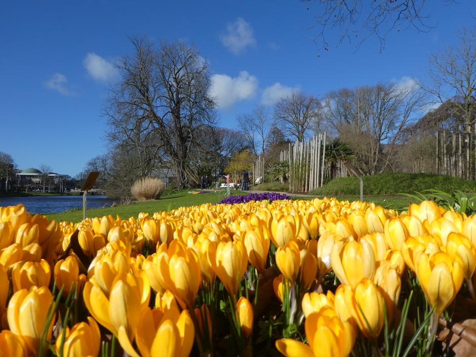Lente in Leiden: veel zon vandaag!