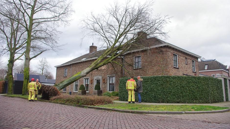 Omgewaaide boom op woonhuis