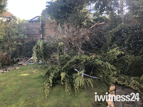 Tree destroys greenhouse in Hornchurch