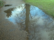 Reflections in water puddles