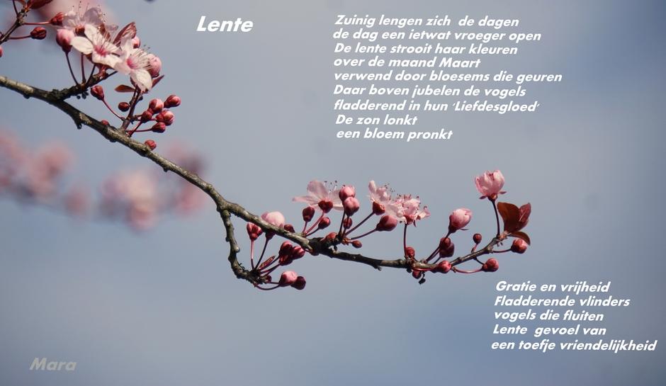 Prille Lente. Met mijn gedicht...