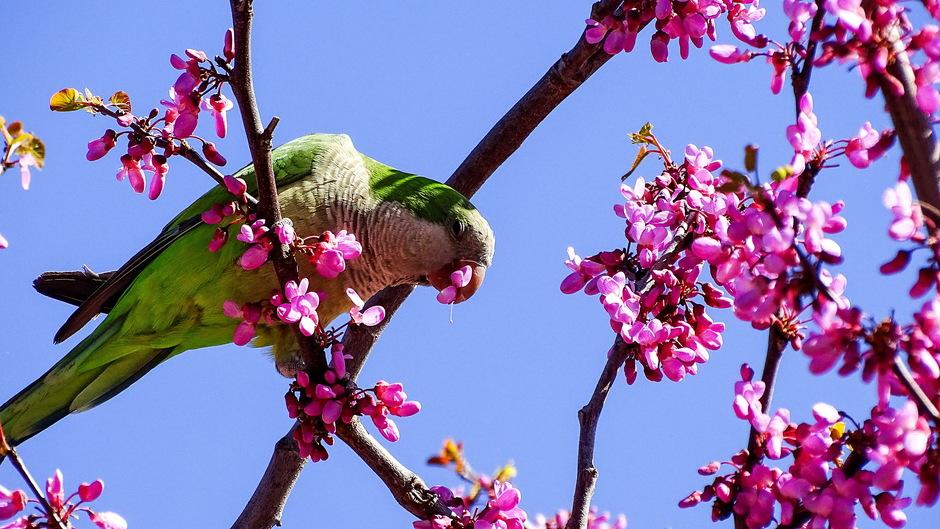 Blauw groen en roze