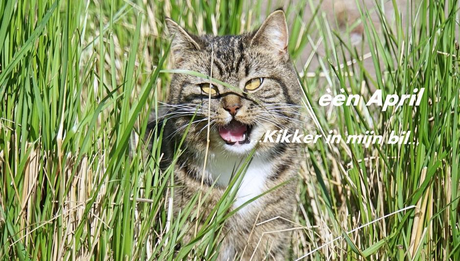 Vanmorgen  in het gras, riep Poeki...1 April...heb een kikker in mijn bil..