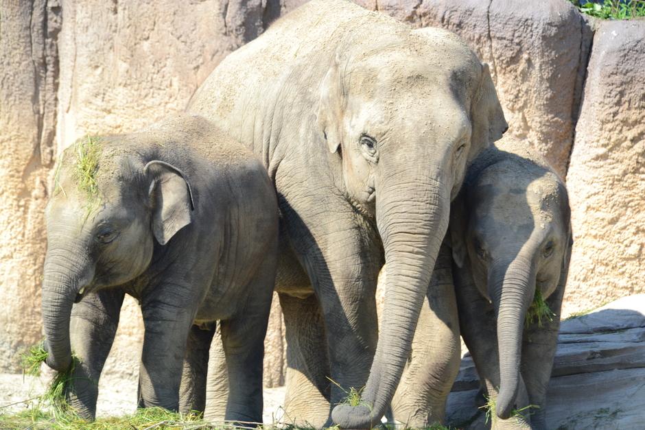 Olifanten genieten ook van de lente zonnetje