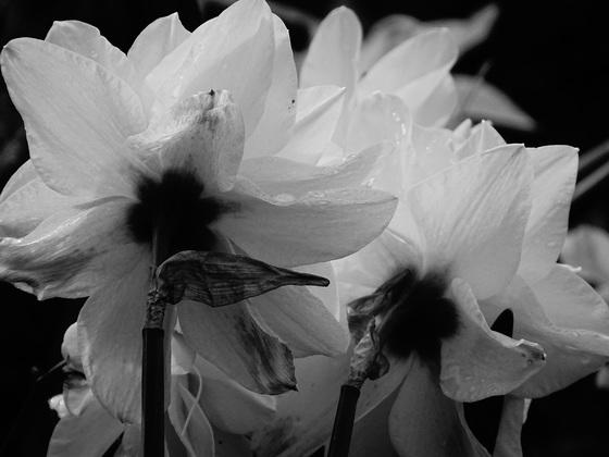 Photo Challenge: Spring