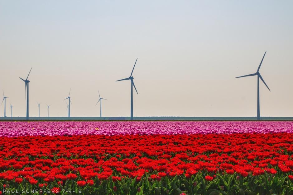 Tulpenvelden in de lentezon