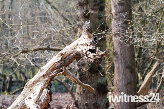 Monster in the wood