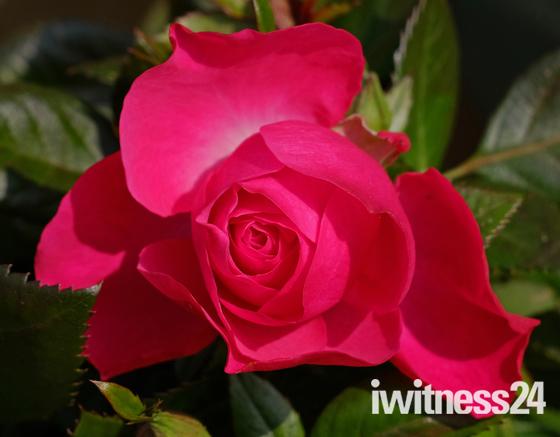Felixstowe in bloom :)