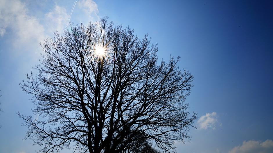 Veel zon